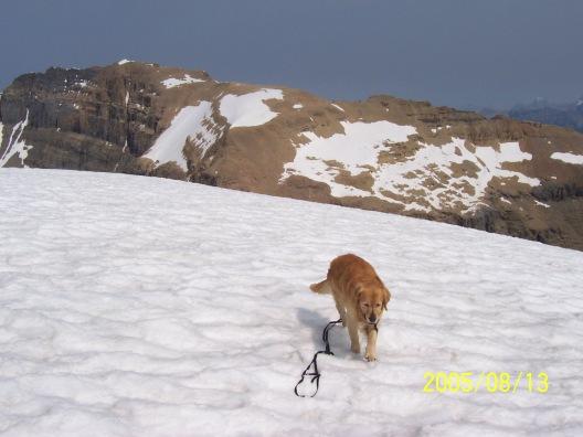 Buddy on Mount Niles
