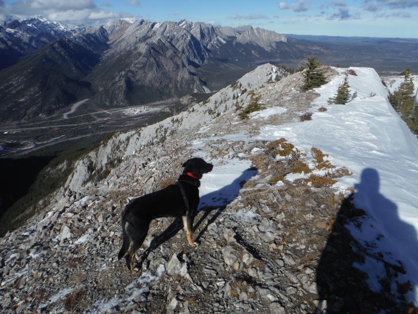 Kona on Heart Mountain Grant MacEwan Peak