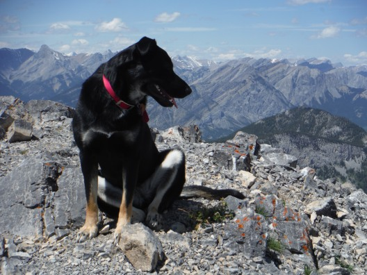 Kona on Baldy