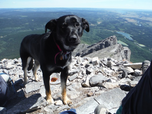 Kona on Yamnuska