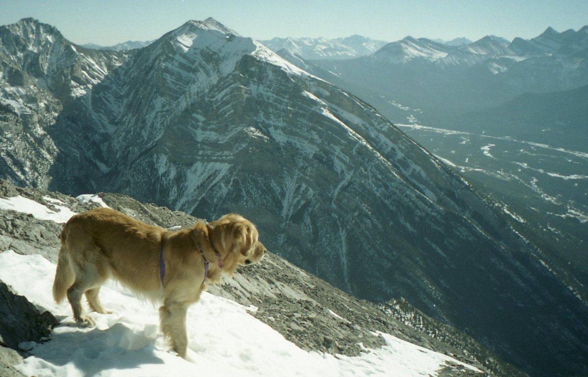 Buddy on Grotto Mountain (1425 mgain)