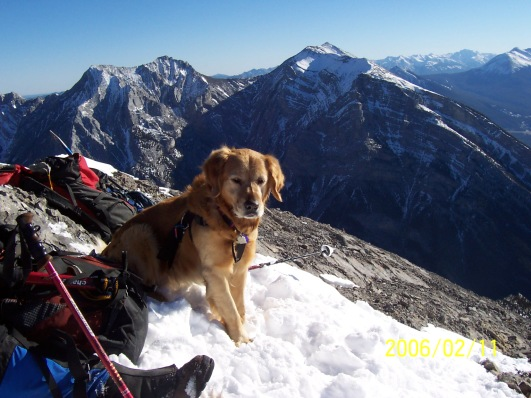 Buddy on Mt Lady Macdonald