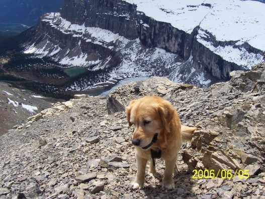 Buddy on Helena Ridge June 2006