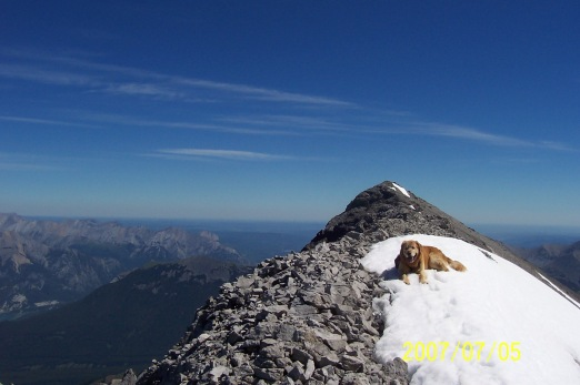 Buddy on Lougheed 2 2007