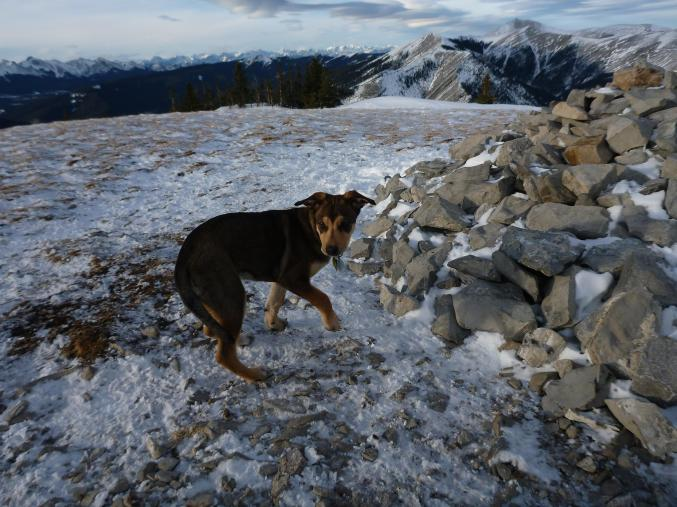 Sophie on Prairie Mtn Jan 2016