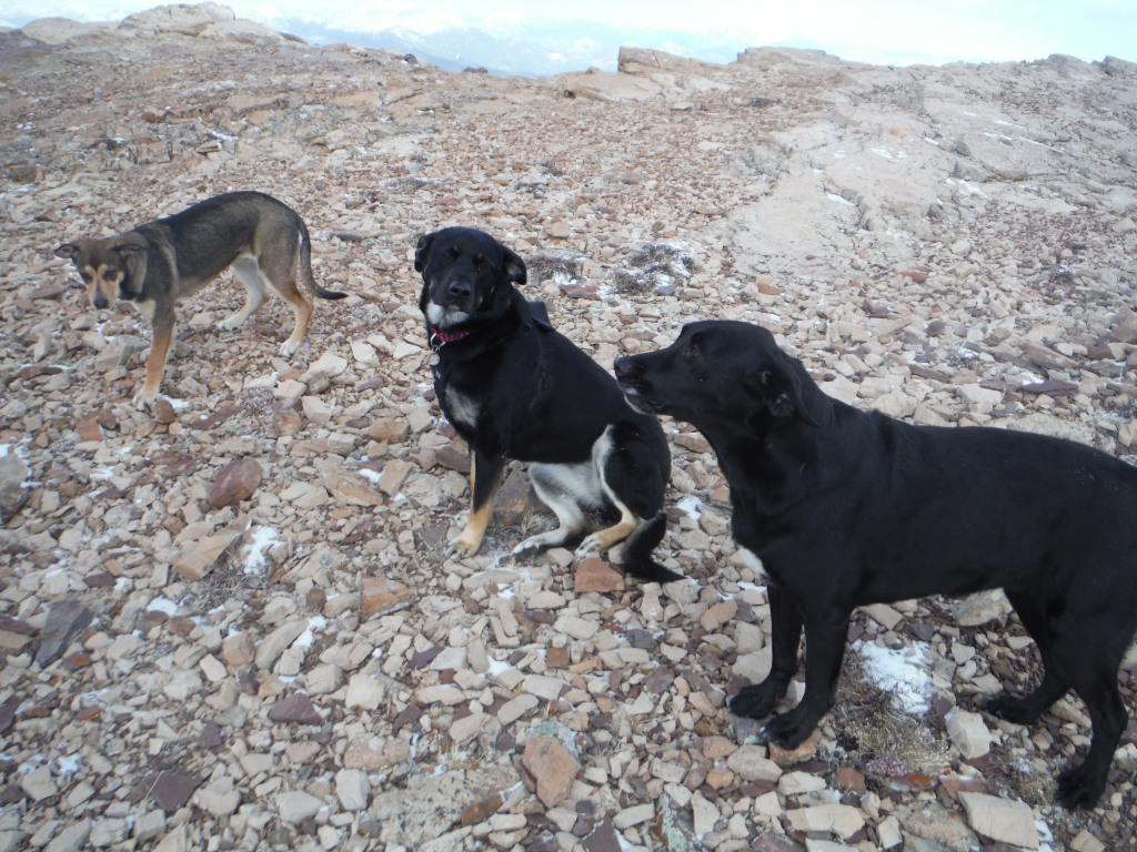 Sophie, Kona and Layla on Table Mountain