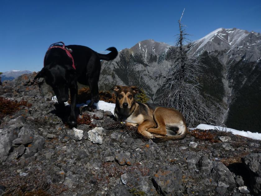 Layla & Sophie on Porupine Ridge