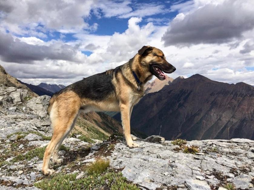 Angus Mt hunter2