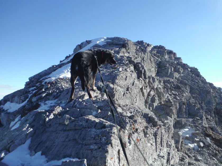 Kona Mt. Baldy ridge Jan 2019