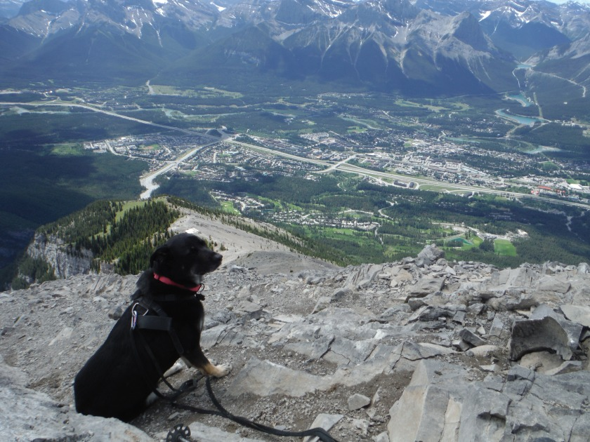 Kona on Lady Macdonald June 2019 Canmore