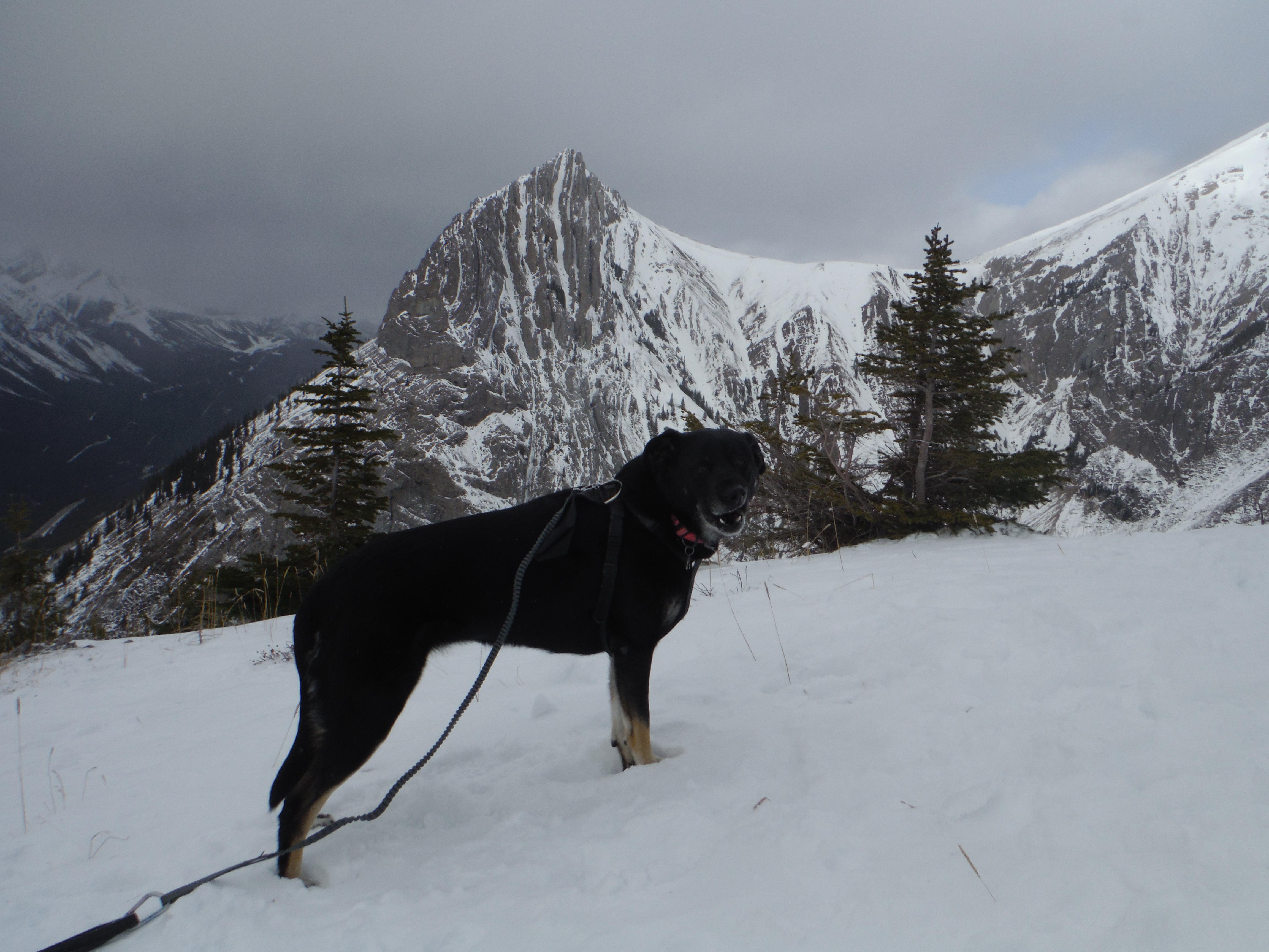 Kona Packenham Jr. Grizzly Peak