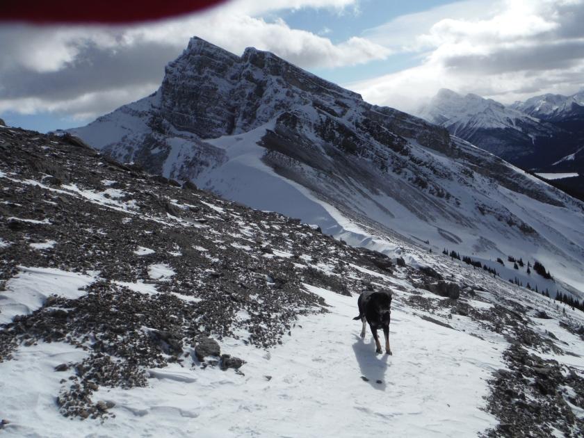 Kona Ha Ling Miner's Peak Lawrence Grassi