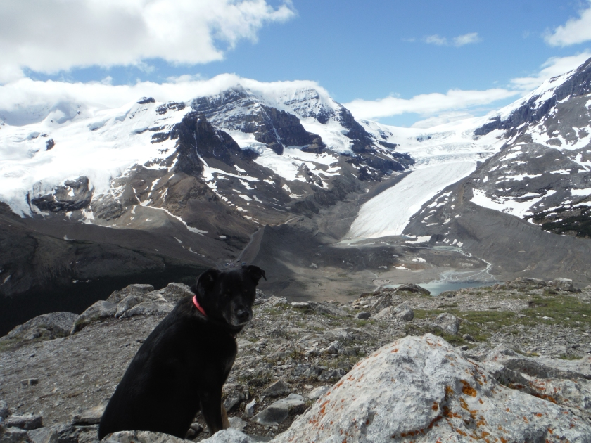 Kona Columbia Icefield Wilcox Ridge