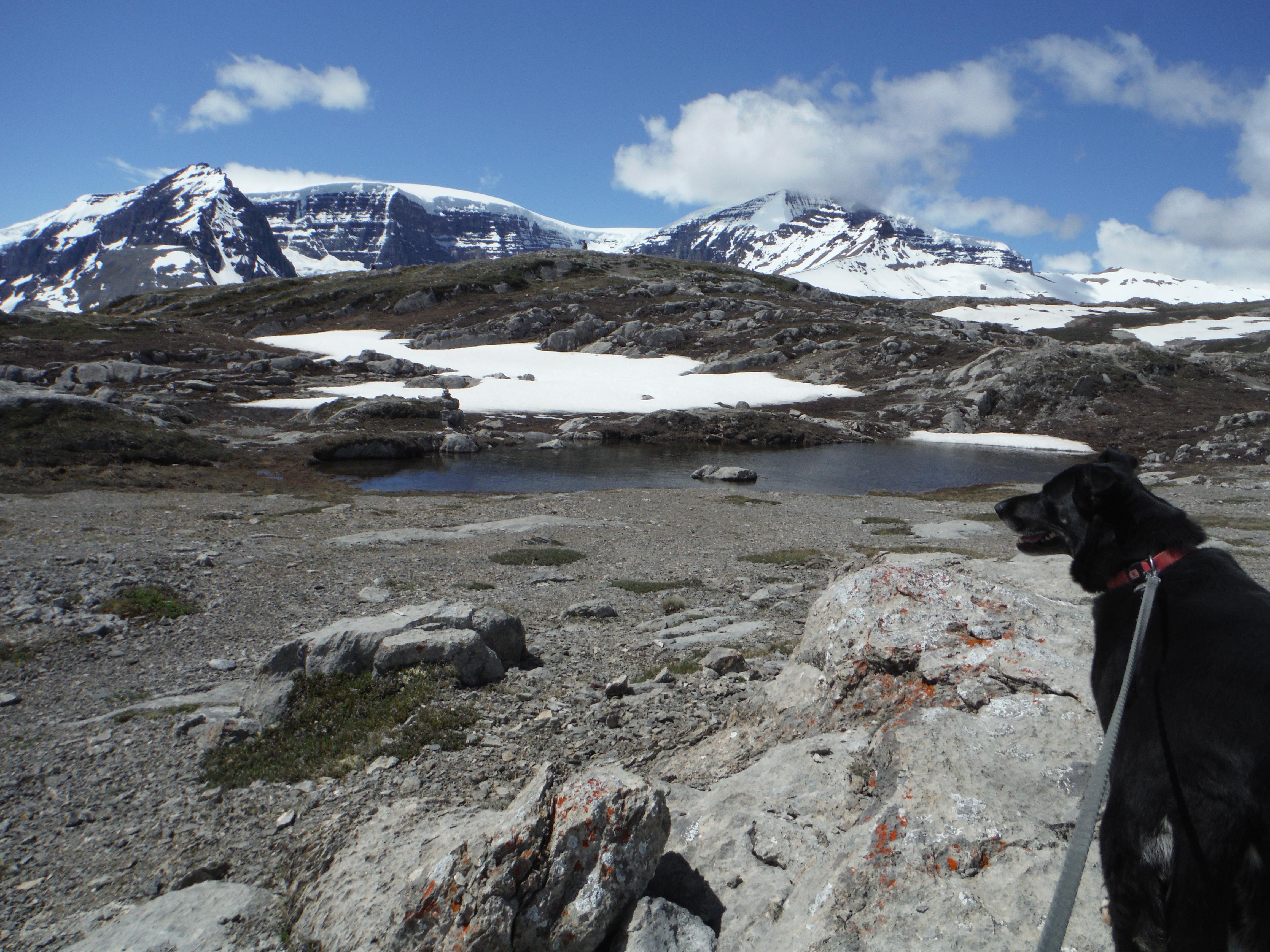 Kona Wilcox Ridge Snow Dome Mt. Kitchener Columbia Icefield Jasper National Park